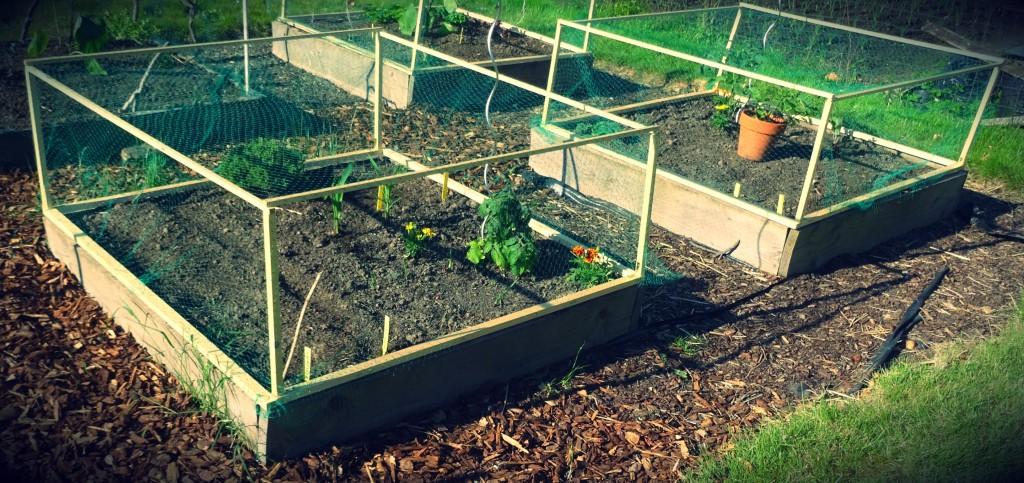 De moestuin van 2016 sheena blogt - Idee van allee tuin ...